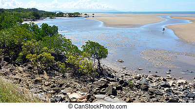 Landscape of a wild beach with Australian mangroves in Queensland  Australia