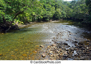 Landscape of a wild stream in Daintree National Park Queensland Australia