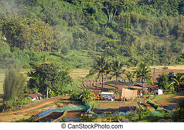 Landscape of agriculture in Thailand