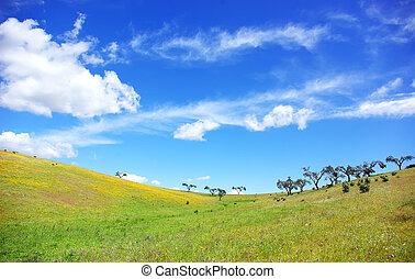 Landscape of alentejo field.