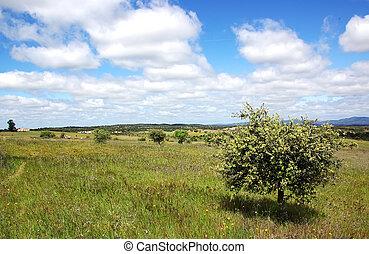 Landscape of alentejo field, Portugal
