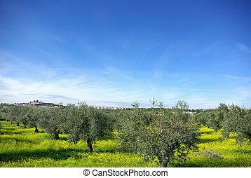 Landscape of alentejo region, Portugal.