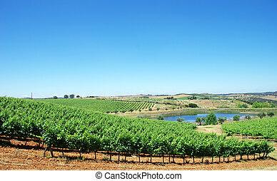 landscape of Alentejo vineyards