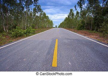 Landscape of asphalt road with eucalyptus on the side