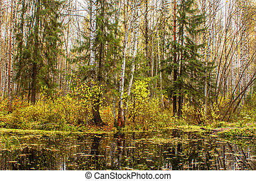 landscape of autumn forest in front of the water of a forest lake