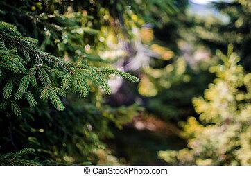 Landscape of autumn trees