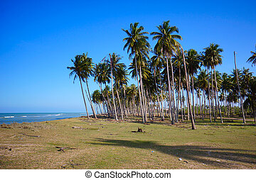 Landscape of beautiful tropical beach at Terengganu, Malaysia