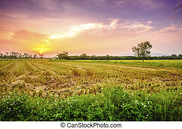 Landscape of countryside in sunset