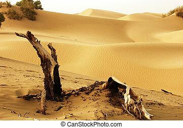 Landscape of deserts - Landscape of dead trees and sandhills...