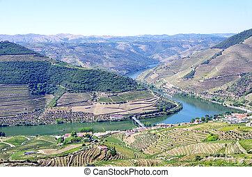 Landscape of Douro vineyards, Pinhão, Portugal