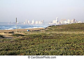 Landscape of Dune Rehabilitation Taking Place at  Beachfront