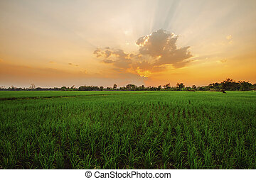landscape of farmland at morning in countryside