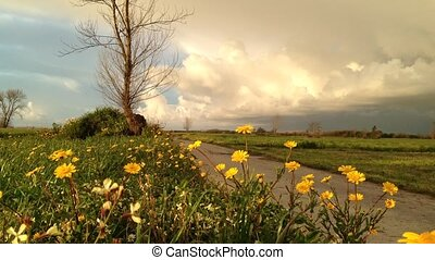 Landscape of field of yellow daisies and country road. Cloudy sky at sunset.