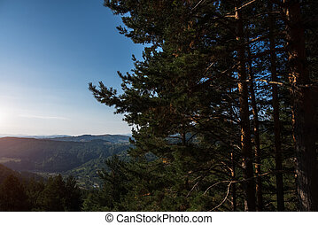 Landscape of firs on sky and mountains background