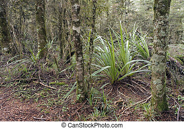 Landscape of foliage in a rain forest in tongariro National Park