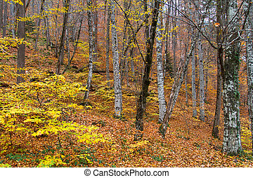Landscape of Forest in Autumn