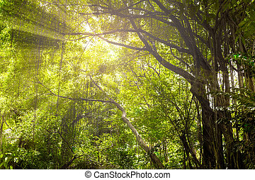 Landscape of fresh green foliage with the light rays through trees.