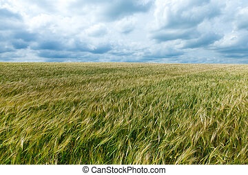 landscape of grass field and green environment concept.