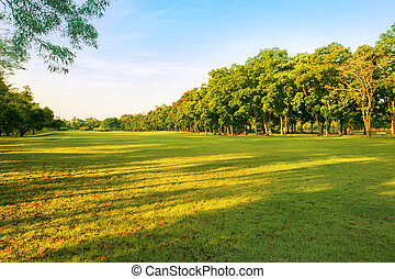 landscape of grass field and green environment public park...