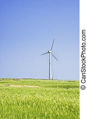 Landscape of green barley field and wind generato