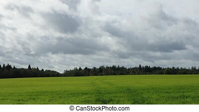 landscape of green field and forest in the distance as well...