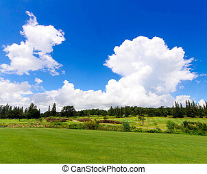Landscape of green field with blue sky