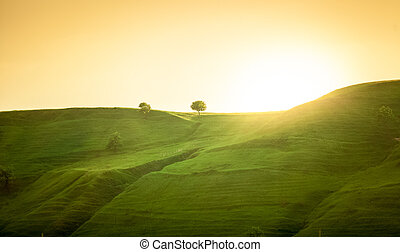 landscape of green hills at sunrise