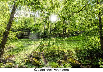 landscape of green spring forest