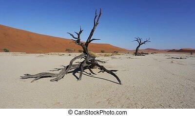 landscape of hidden Dead Vlei - pan shoot of beautiful...