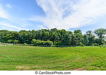 landscape of horse ranch
