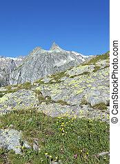 landscape of italian alpine mountain in summer