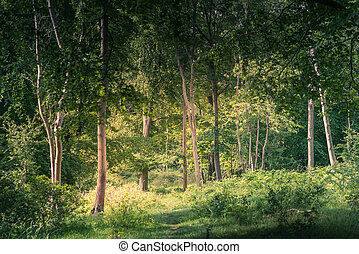 Landscape of lush young green forest with native trees UK