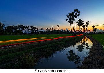 Landscape of rice fields