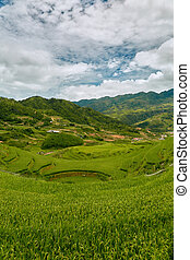 Landscape of rice paddies in a cloudy morning