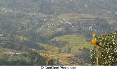 Landscape of rice terraces in countryside. Panoramic view of rice terraces in green rural lands of Himalaya mountains in sunlight, Nepal. Nagarkot.