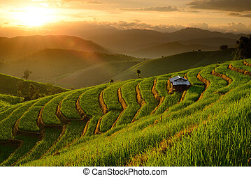 landscape of Rice Terraces with sunset backdrop