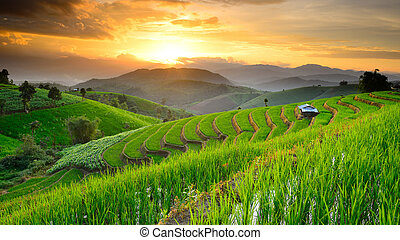 landscape of Rice Terraces with sunset backdrop at Ban...