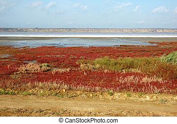 Landscape of salt Kuyalnicky liman (lake) - analog of Dead Sea