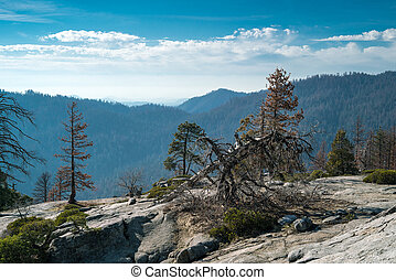 Landscape of Sequoia National park in spring with old dry...