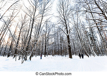 landscape of snow-covered urban park in winter