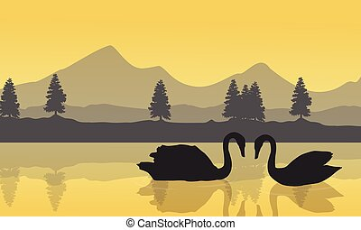 Landscape of swan on the lake