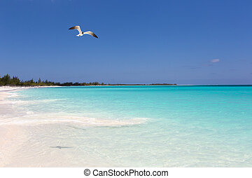 Landscape of the beach in the Caribbean Sea