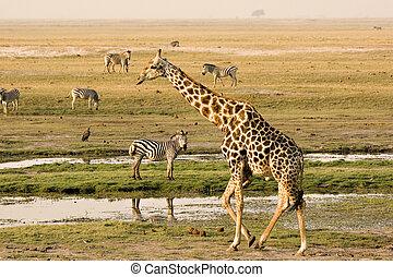 Landscape of the Chobe Riverfront in Botswana