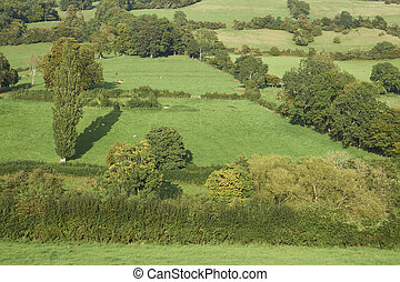 Landscape of the Cotswolds - Lush green fields of the ...