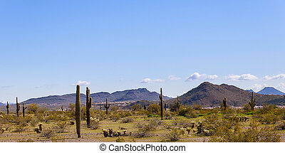 Landscape of the desert, cactus and mountains in Arizona