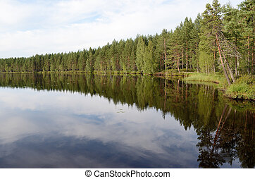 landscape of the forest lake in summer