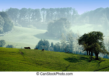 landscape of the green countryside