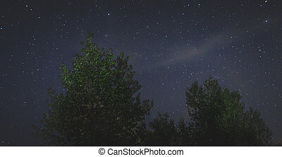 landscape of the night sky silhouettes of trees