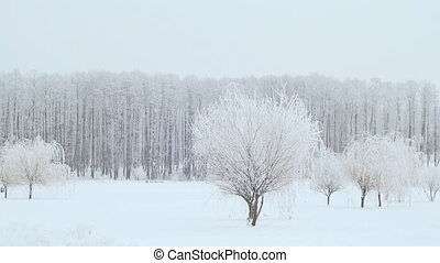 Landscape of the winter city park. Snow falls.