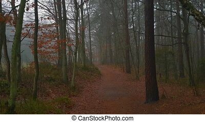 Landscape of the woods at autumn. Foggy day